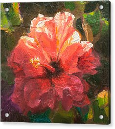 Ruffled Light Double Hibiscus Flower Acrylic Print