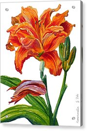 Ruffled Orange Daylily - Hemerocallis Acrylic Print
