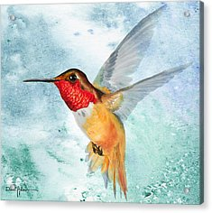 Da199 Rufous Humming Bird By Daniel Adams Acrylic Print