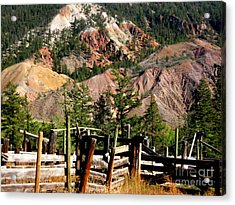Rugged Beauty Acrylic Print by Kathy Bassett