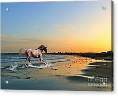 Run Like The Wind Acrylic Print by Morag Bates