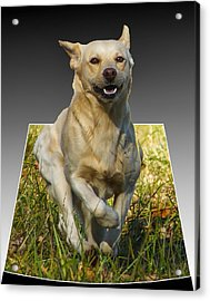 Run Puppy Run Acrylic Print by B Wayne Mullins