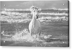 Run White Horses I Acrylic Print by Tim Booth