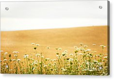 Run With Me Through A Field Of Wild Flowers Acrylic Print