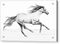Acrylic Print featuring the drawing Runaway by Sophia Schmierer