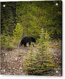 Running Bear Acrylic Print