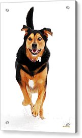 Running Dog Art Acrylic Print by Christina Rollo