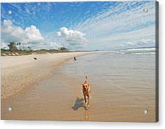 Acrylic Print featuring the photograph Running Free 2 by Ankya Klay