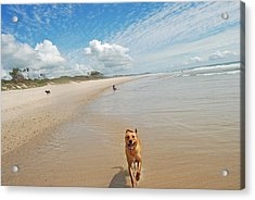 Acrylic Print featuring the photograph Running Free 3 by Ankya Klay