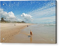 Acrylic Print featuring the photograph Running Free by Ankya Klay