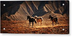 Acrylic Print featuring the photograph Running Free by Priscilla Burgers