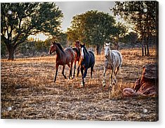 Running Horses Acrylic Print by Kristina Deane