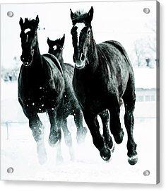 Running Horses Acrylic Print by Makieni's Photo