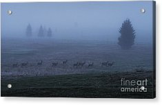 Running In The Mist Acrylic Print