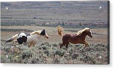 Running Mustangs Acrylic Print