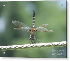 Running On All Six Acrylic Print by Eunice Miller