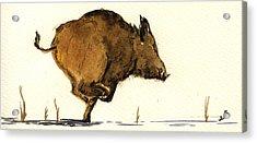 Running Wild Boar Acrylic Print