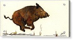 Running Wildboar Acrylic Print by Juan  Bosco