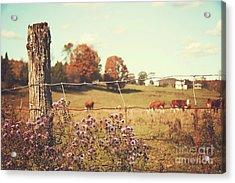 Rural Country Scene Acrylic Print by Sandra Cunningham