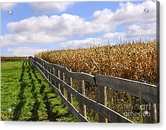 Rural Landscape With Fence Acrylic Print by Elena Elisseeva