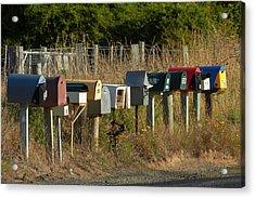 Rural Letterboxes, Otakou, Otago Acrylic Print by David Wall