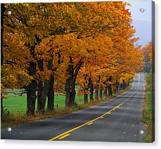 Rural Road In Autumn Acrylic Print by Panoramic Images