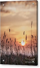Rural Sunset Acrylic Print