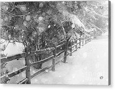 Rural Winter Scene With Fence Acrylic Print by Elena Elisseeva