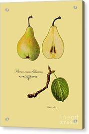 Russet Pear Acrylic Print