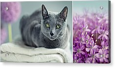 Russian Blue Collage Acrylic Print by Nailia Schwarz