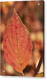 Rusted Acrylic Print by Puzzles Shum