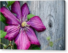 Acrylic Print featuring the photograph Rustic Clematis by Susan  McMenamin