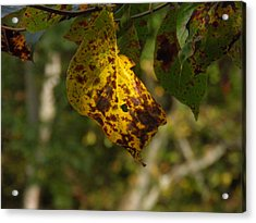 Acrylic Print featuring the photograph Rusty Leaf by Nick Kirby