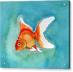 Acrylic Print featuring the painting Ryukin Goldfish by Katherine Miller
