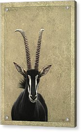 Sable Acrylic Print by James W Johnson