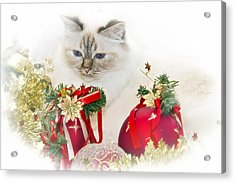 Sacred Cat Of Burma Christmas Time II Acrylic Print by Melanie Viola