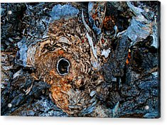 Sacred Circle Of Life Acrylic Print by Peter Cutler
