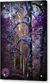 Sacred Forest Acrylic Print