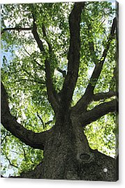 Acrylic Print featuring the photograph Sacred Oak by Melissa Stoudt