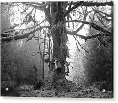 Sacred Tree No. 2 Acrylic Print