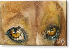 Sad Eyes Acrylic Print