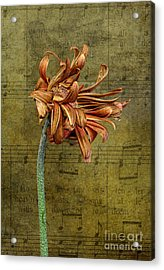 Acrylic Print featuring the digital art Sad Song by Shirley Mangini