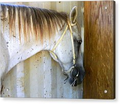 Acrylic Print featuring the photograph Saddle Break by Kathy Barney