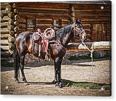 Saddled And Waiting Acrylic Print