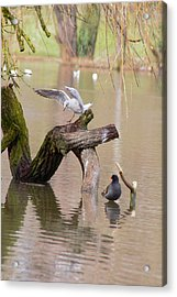 Safe Landing Acrylic Print by Theresa Selley