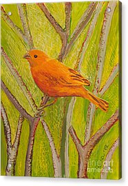Acrylic Print featuring the painting Saffron Finch by Anna Skaradzinska