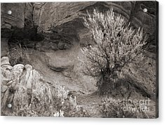 Sagebrush On Polecat Bench Acrylic Print by Janeen Wassink Searles