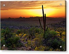 Saguaro And The Setting Sun Acrylic Print