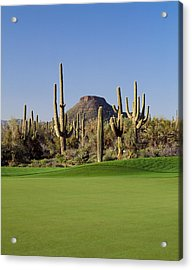 Saguaro Cacti In A Golf Course, Troon Acrylic Print by Panoramic Images