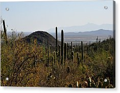 Saguaro Cactus And Valley Acrylic Print by Diane Lent